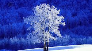 treeblue