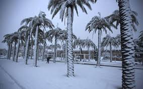 Jerusalem snow palms